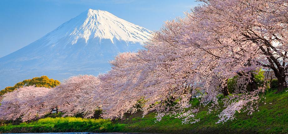 spring fujiyama